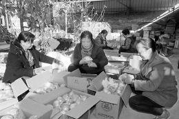 苹果产业成浮山农民增收致富新途径