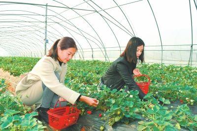 """淅川休闲农业""""钱""""景广(图)"""
