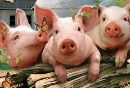 贫困户发展生猪养殖走上致富路 一年纯收入5万多
