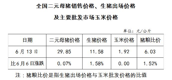 全国二元母猪销售价格、生猪出场价格及主要批发市场玉米价格(6月13日)