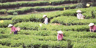 保山:加快威尼斯平台登录农村现代化进程