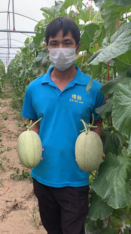 百果园暖春助农再行动,帮助海南蜜瓜打开新销路