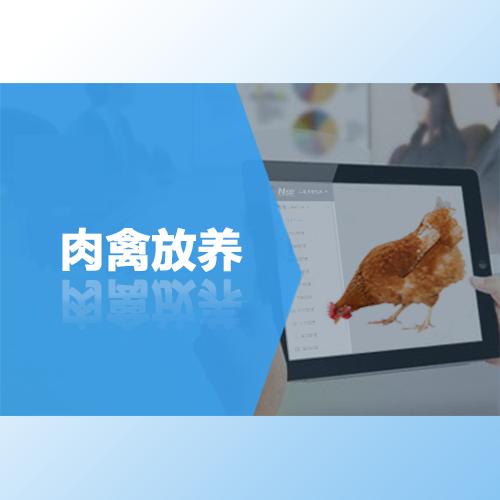 肉禽放养,互联网时代肉禽放养新模式